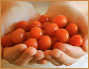grape tomatoes offered to you